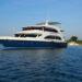 ¿Por qué escoger a un crucero de buceo vida a bordo?